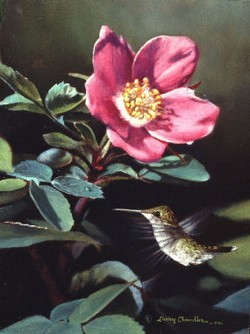 Hummingbird & Desert Rose