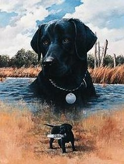 Black Lab and Pup