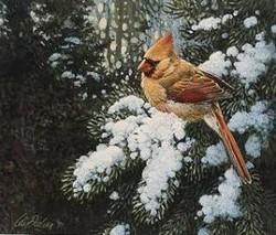 Light Snow Cardinal