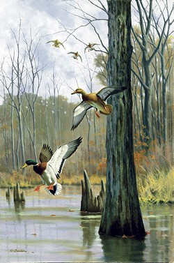 Tall Timber Mallards