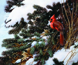 Winter Grotto Cardinal