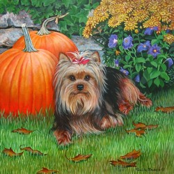 Yorkie with Pumpkins