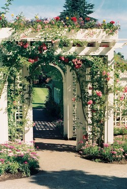 Arches and Roses